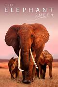 Sloní královna (2018)